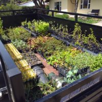 Containerized Native Plants